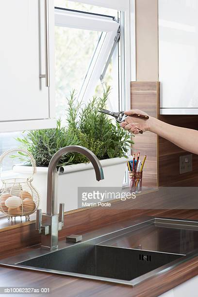 Unrecognizable person cutting herbs growing in pot on kitchen window sill, close-up of hand