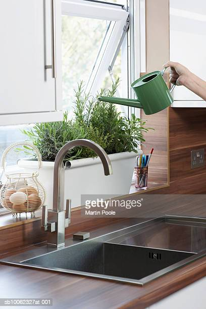 unrecognizable person watering herbs growing in pot on kitchen window sill, close-up of hand - ledge stock pictures, royalty-free photos & images