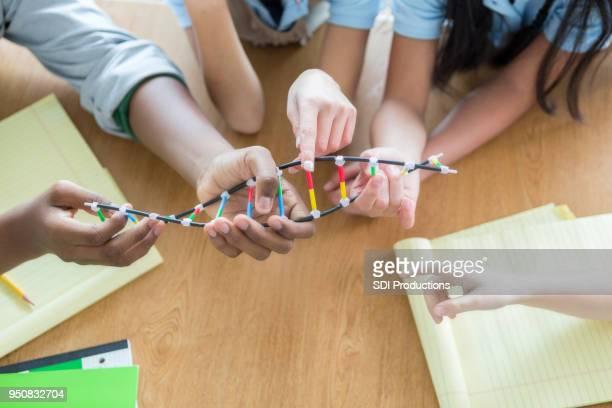 Unrecognizable student examine DNA helix model