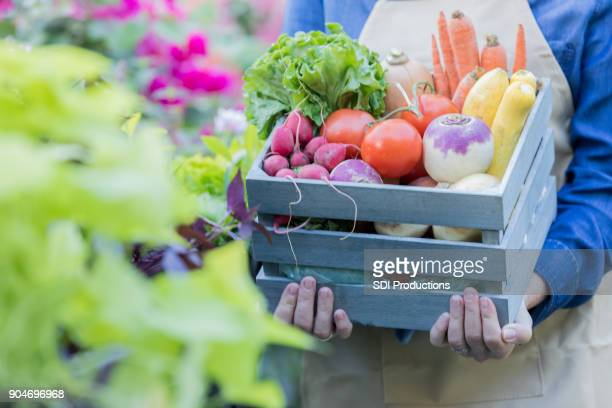 unrecognizable woman holds basket of fresh veggies - farmers market stock pictures, royalty-free photos & images