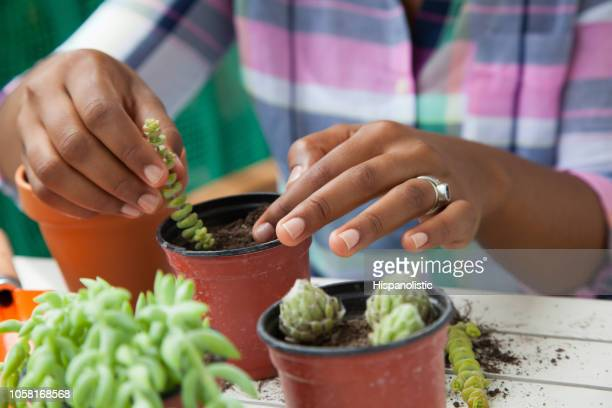 Succulent Garden Stock Pictures Royalty Free Photos Images