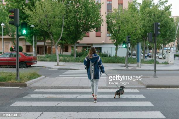 unrecognizable young adult girl walking the dog alone in a croswalk - crossing stock pictures, royalty-free photos & images
