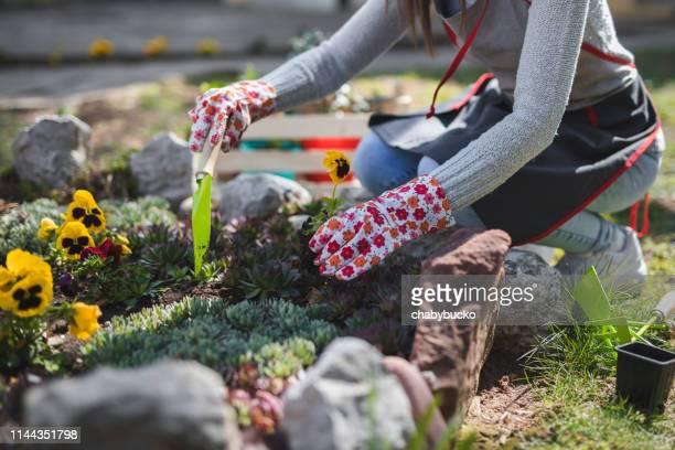 jeune dame méconnaissable travaille dans le jardin - humus photos et images de collection