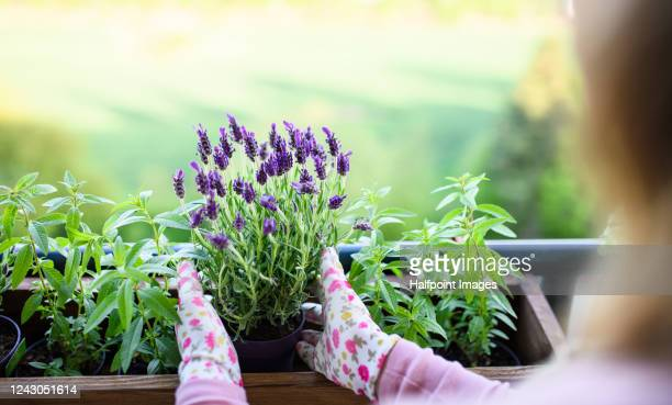 unrecognizable young woman gardening on balcony, urban garden concept. - balcony stock pictures, royalty-free photos & images