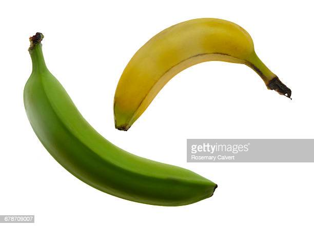 unripe and ripe bananas convey success. - unripe stock pictures, royalty-free photos & images