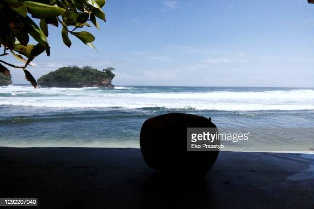 unripe coconut ice with beach atmosphere - coco de mer stock pictures, royalty-free photos & images