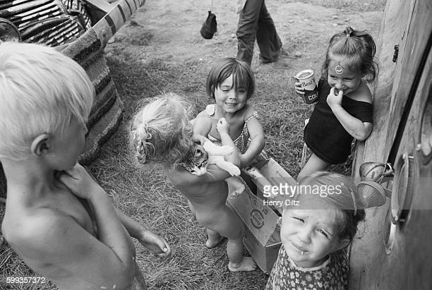 Unsupervised children fight over a young cat at the free Woodstock Music and Art Fair The festival took place on Max Yasgur's dairy farm which he...