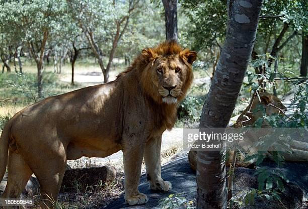 ARD 'Unter der Sonne Afrikas'Zimbabwe Afrika Tiere LöweReise