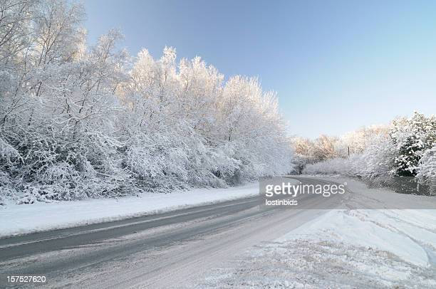 Untreated Road with Snow Laden Tree