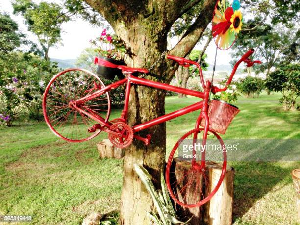 Unused old red bicycle hanging from a tree.