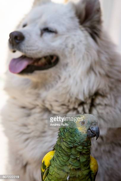 unusual animal pairs - andres ruffo stock pictures, royalty-free photos & images