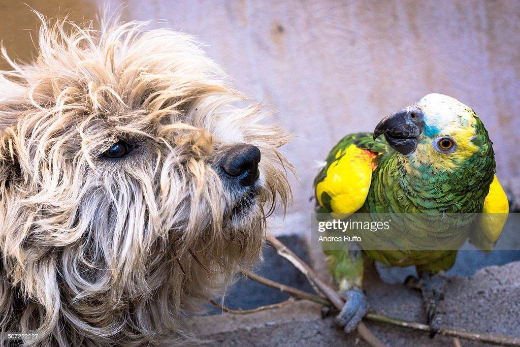Unusual Animal Pairs : Stock Photo