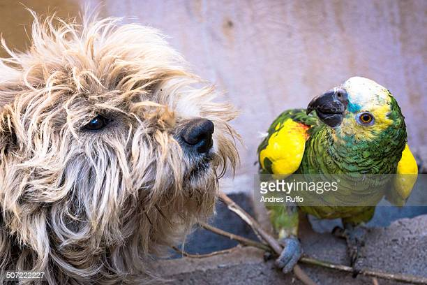 unusual animal pairs - andres ruffo stock-fotos und bilder