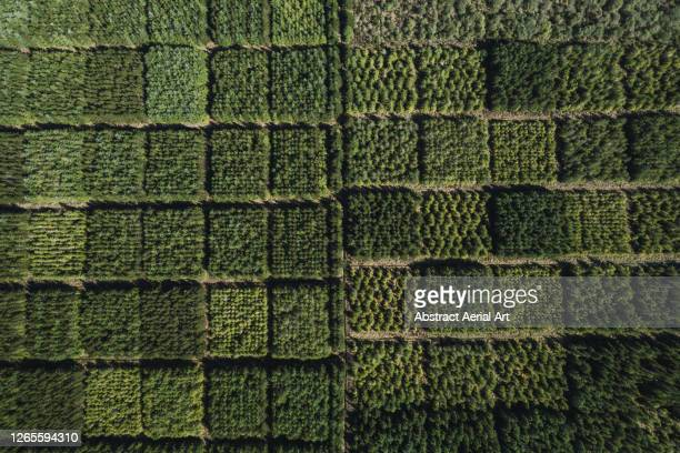 unusual forest seen from directly above, scottish highlands, united kingdom - tourist stock pictures, royalty-free photos & images