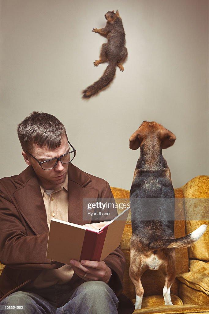 Unwelcome Intruder Squirrel : Stock Photo