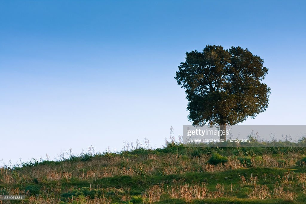 Uphill tree : Stock Photo