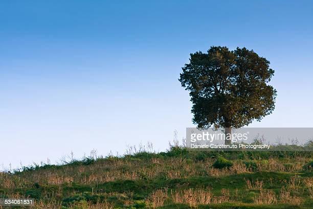 Uphill tree