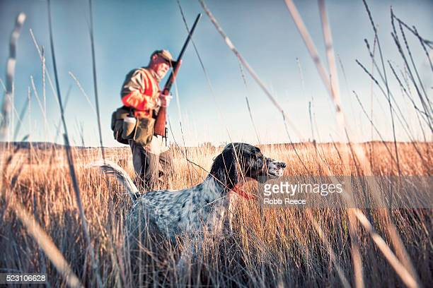 upland bird hunter in field with his dog - hunting stock pictures, royalty-free photos & images