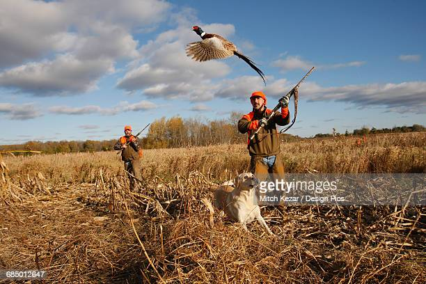 Upland Bird Hunters In Field With Dog