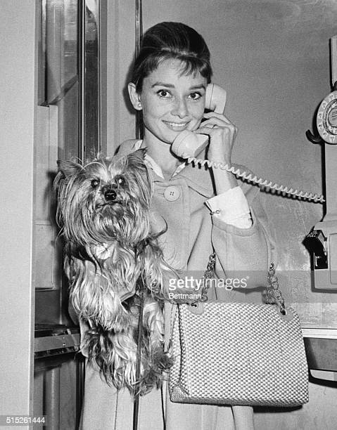 Upon arrival at Idlewild Airport late September 30th lovely Audrey Hepburn hugging her little Yorkshire Terrier 'Famous' Telephones Hubby actor Mel...