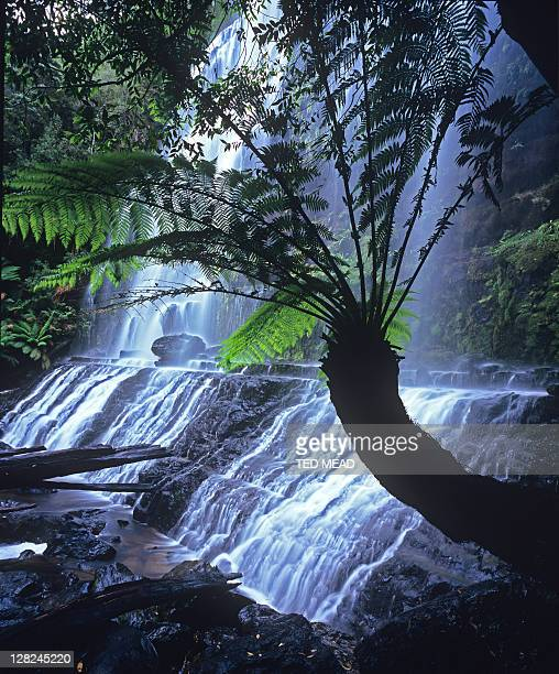 upper cascade of russell falls in mt field national park tasmania australia. - ted russell stock pictures, royalty-free photos & images