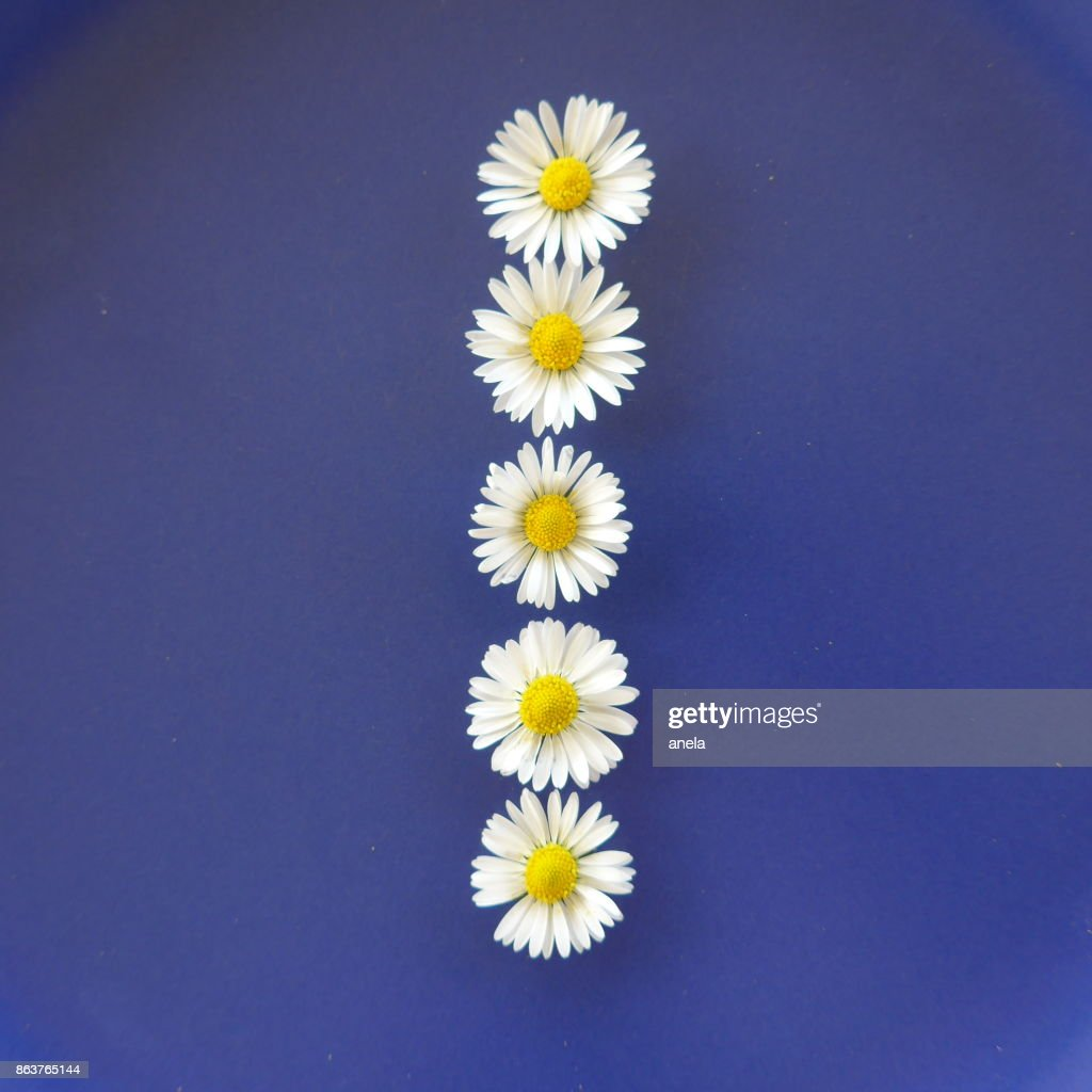 Upper case letter from white flowers called daisies on blue upper case letter from white flowers called daisies on blue background stock photo mightylinksfo