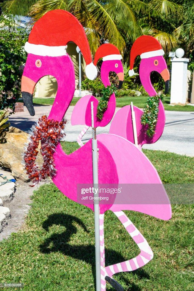 Christmas In Florida Keys.Upper Florida Keys Key Largo Pink Flamingoes Christmas