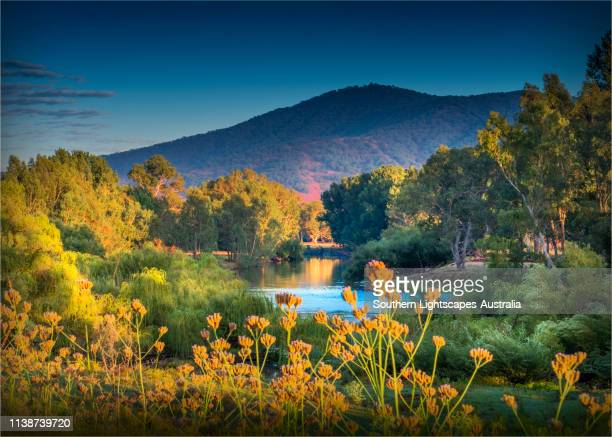 upper murray river, alpine high country, east gippsland, walwa, victoria, australia. - victoria australia stock pictures, royalty-free photos & images