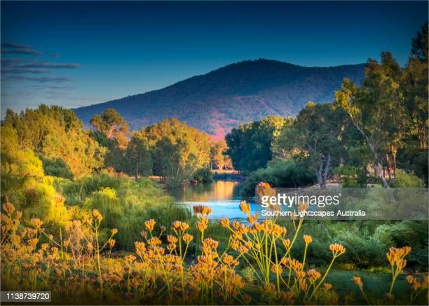 upper murray river, alpine high country, east gippsland, walwa, victoria, australia. - victoria austrália - fotografias e filmes do acervo