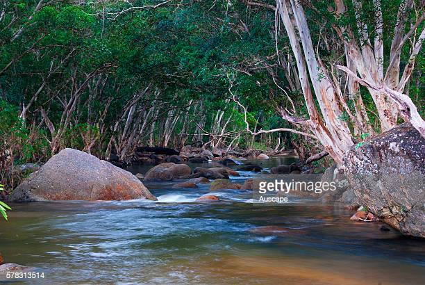 Upper Murray River running between densely wooded banks Girramay National Park North Queensland Australia