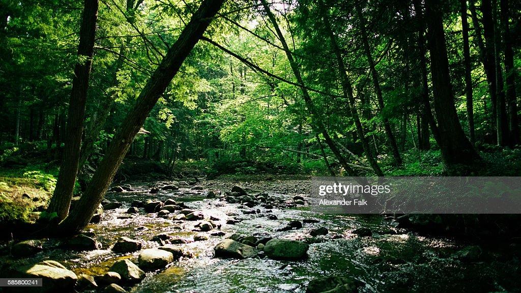 Upper Peninsula Michigan : Stock Photo