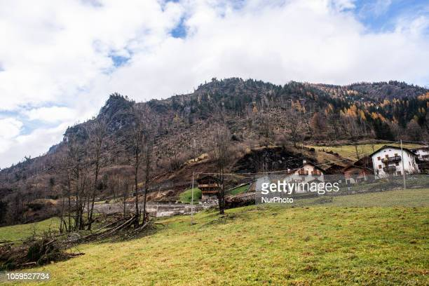 Uprooted trees after extreme winds of up to 190 kilometres per hour ripped through the Dolomites Mountains of Colle Santa Lucia Belluno Province in...