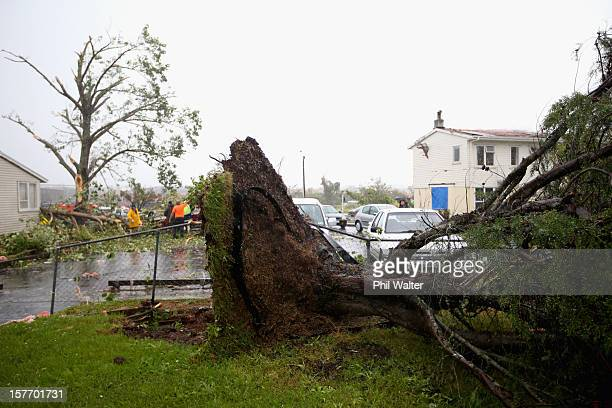 Uprooted trees and storm debri are scattered around the Auckand suburb of Hobsonville in the aftermath of a tornado that struck on December 6 2012 in...