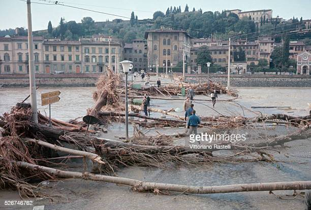Uprooted trees are strewn about in Florence after the devastating flood of November 1966 during which the water of the Arno rose as high as 20 feet...