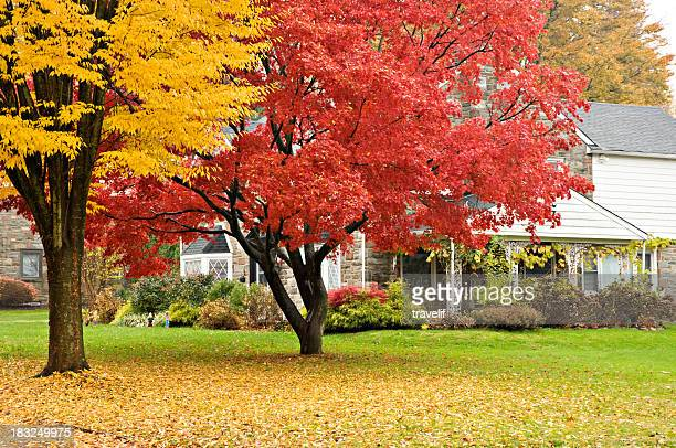 Upscale house and front lawn in autumn colors.