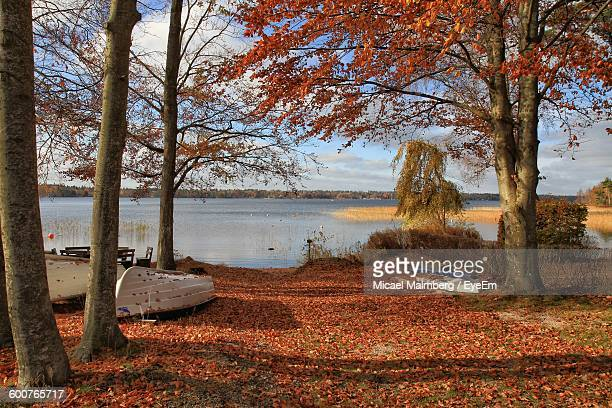 upside down boats by autumn trees against lake - vaxjo stock pictures, royalty-free photos & images