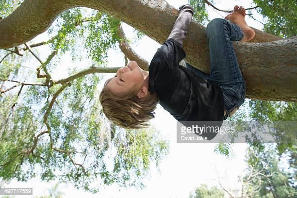 Upside down boy wrapped around tree branch