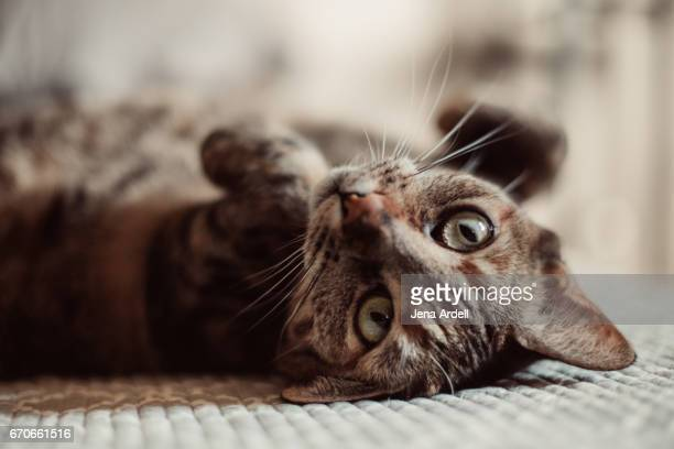 upside down cat - トラ猫 ストックフォトと画像