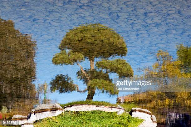 upside down - barrie stock pictures, royalty-free photos & images