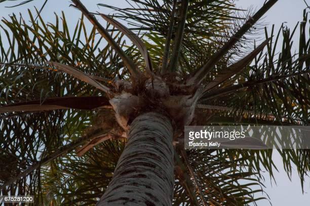 Upward View of a Palm Tree