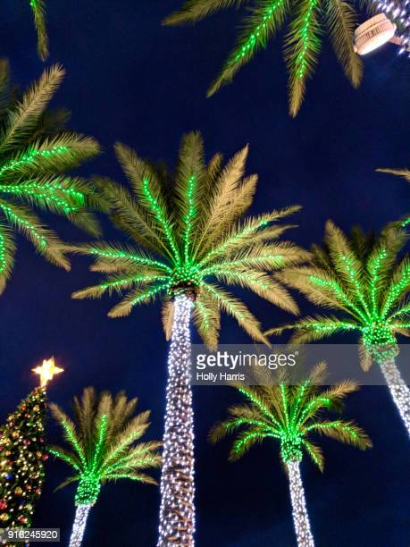 Upward view of palm trees with Christmas lights and Christmas tree at night