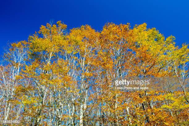 Urabandai autumn scenery