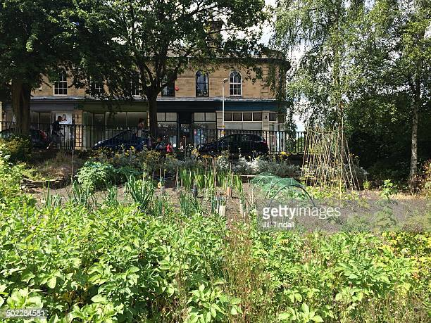 Urban allotment plot growing vegetables opposite parade of shops in Saltaire, West Yorkshire