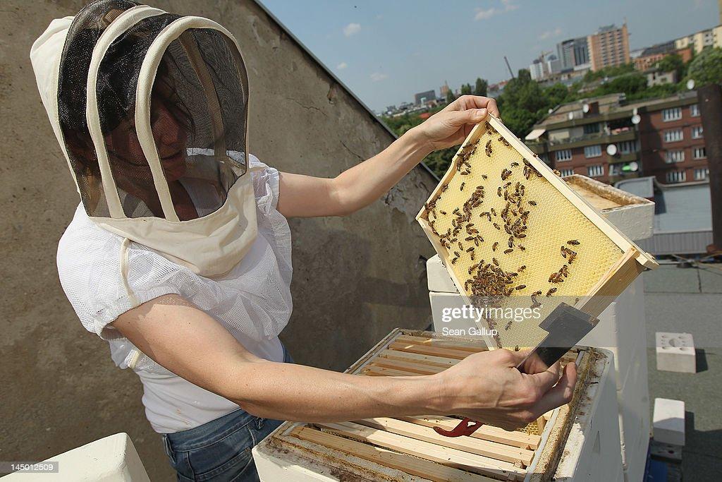 Urban Beekeeping Growing In Popularity : News Photo