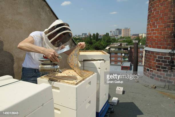 Urban beekeeper Erika Mayr uses a smoker to calm her bees as she checks on the health as well as the honey content of one of her honey bee colonies...