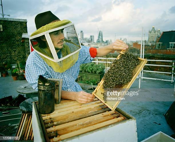 urban beekeeper - 養蜂 ストックフォトと画像