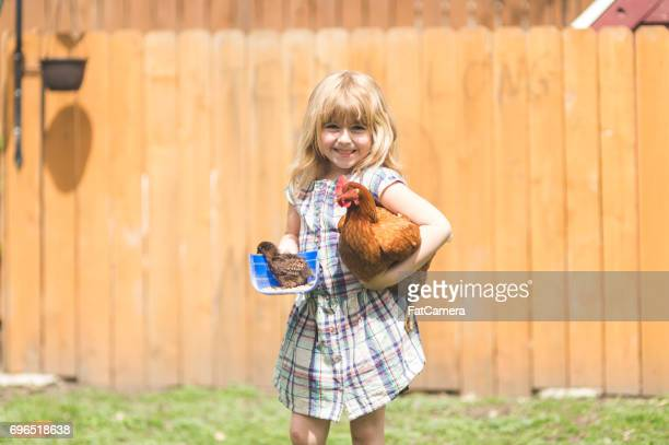 urban chicken farm! - waterloo iowa stock pictures, royalty-free photos & images