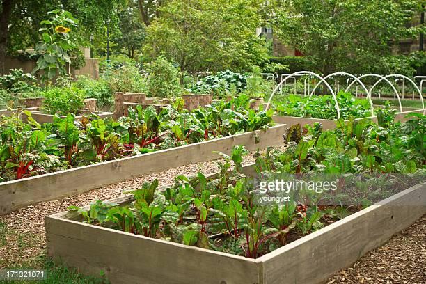 urban community garden - community garden stock pictures, royalty-free photos & images