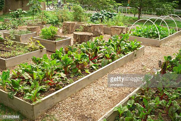 urban community garden - urban garden stock photos and pictures