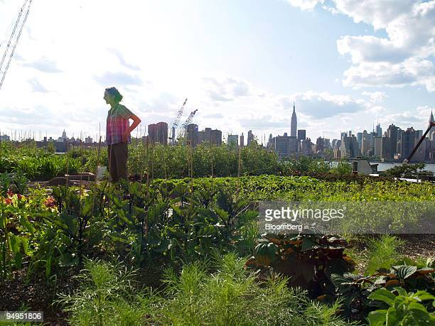 Urban farmer Annie Novak surveys the farm in Brooklyn New York US on July 14 2009 Rooftop Farms has 6000 square feet of space to raise produce